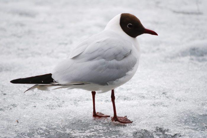 Jak to ti ptáci dělají: boj s mrazem
