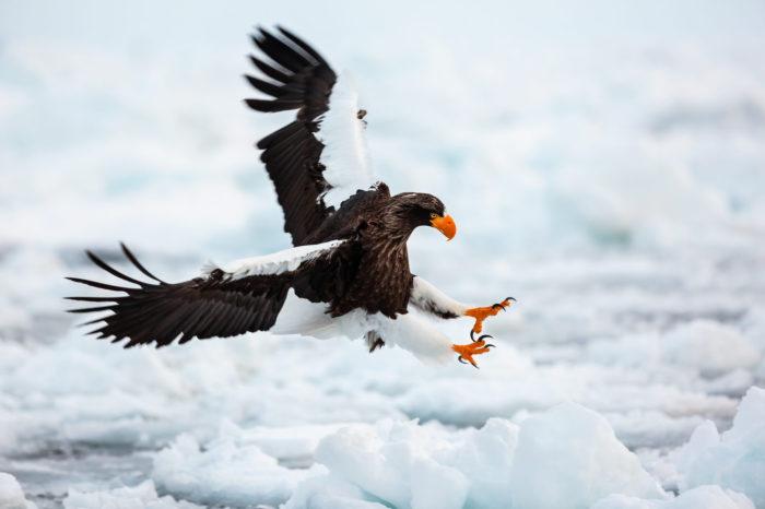 Fotograf Michal Dobeš: Ptáci jsou pro mě symbolem volnosti a inspirace