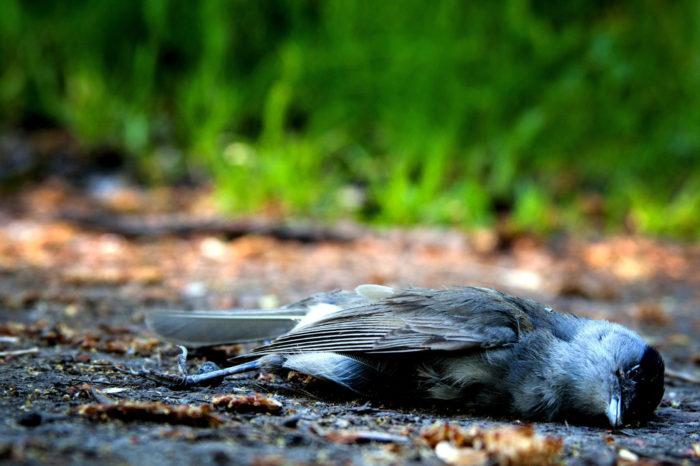 Mortalita ptáků – data z jihozápadního Plzeňska