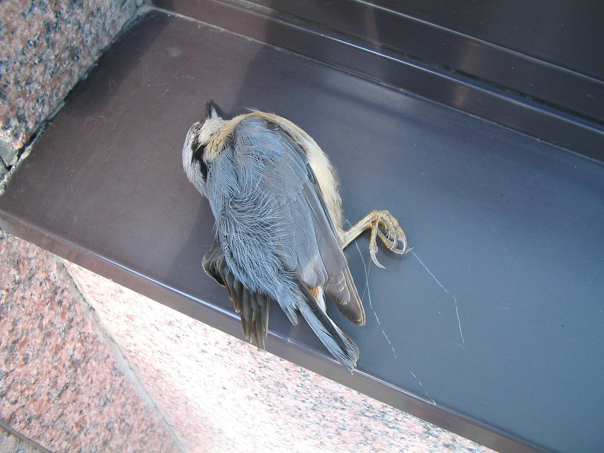 Ptáci mají tendenci do skel naletovat ve velké rychlosti, jelikož zrcadlící se stromy se (ledňáček říční, drozd kvíčala, kos černý, Ericson, W.
