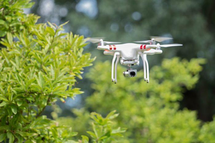 Jaký vliv má používání dronů na ptáky?