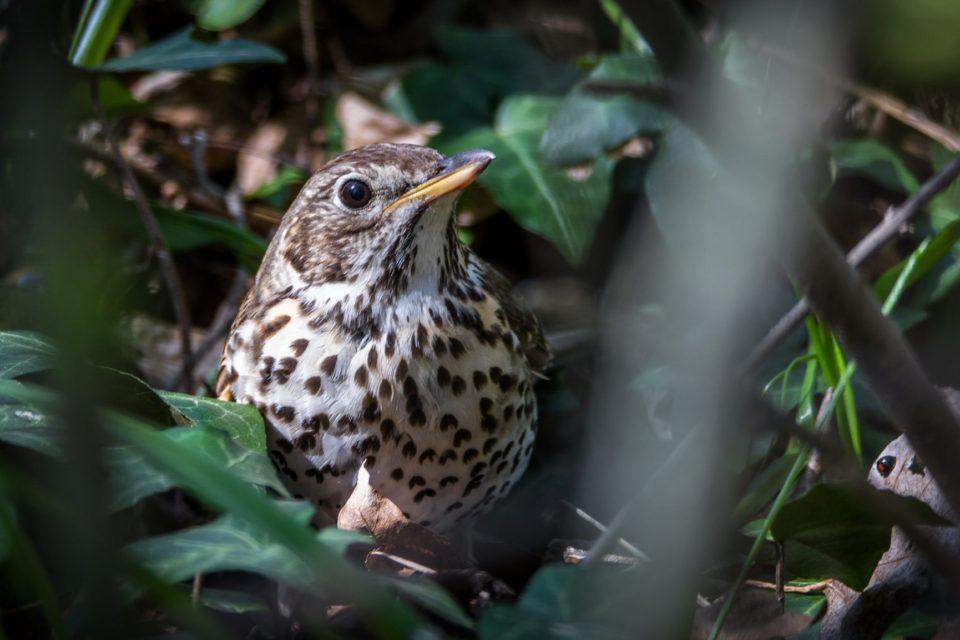 obrázky mého ptáka