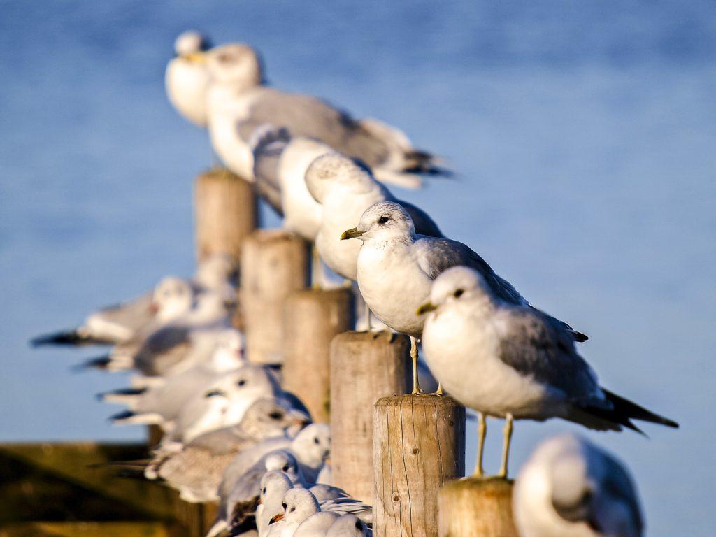 Datování skutečné rady divoká kachna