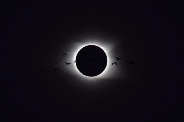 Co dělají ptáci při zatmění slunce?