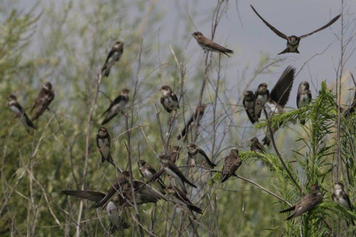 Ochranná opatření pro ptáky na Hrušovské zdrži