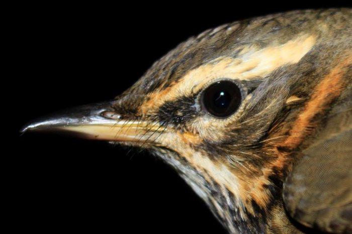 Silný vítr pozastavil migraci ptáků