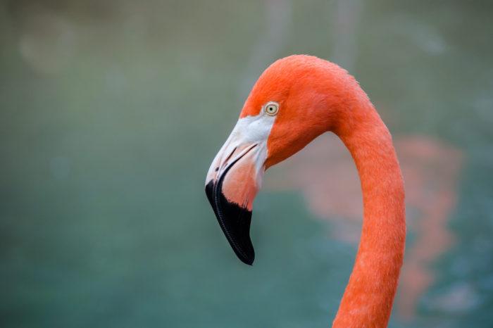 Karibik: Život ptáků po hurikánu Irma a Maria
