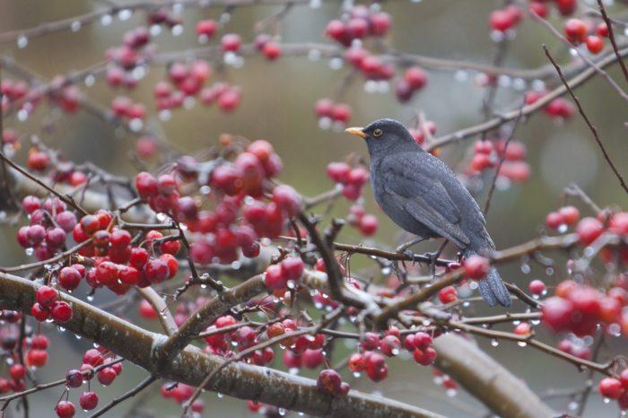 Podzim na zahradě: jak pomoci ptákům lépe přežít zimu?