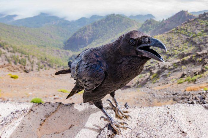 Krkavcovití ptáci a jejich schopnost předvídat budoucnost