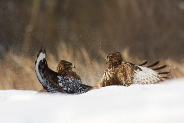 Pavel Řepa: Že zimní početnosti ptáků nejsou zajímavé? Ale jsou!