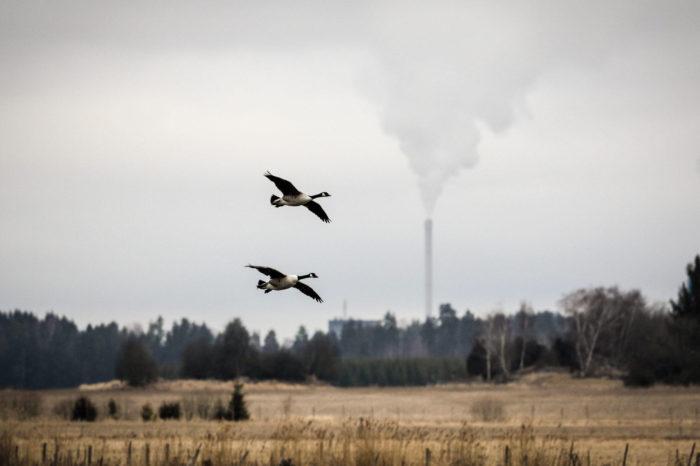 Co nám mohou prozradit ptáci o znečištění ovzduší