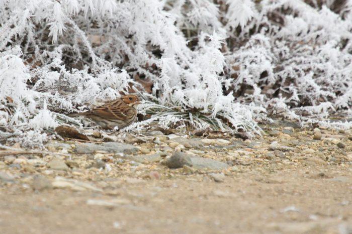 Tajemství ptačích zatoulanců
