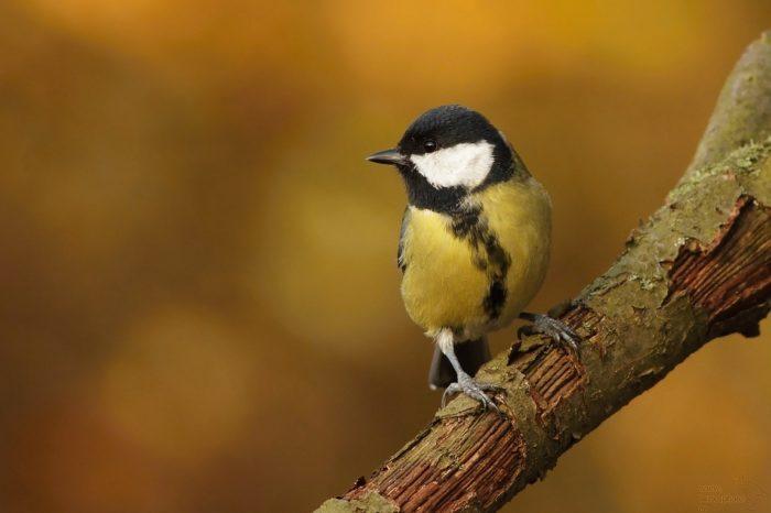 V Praze se chystá první dětská ornitologická konference