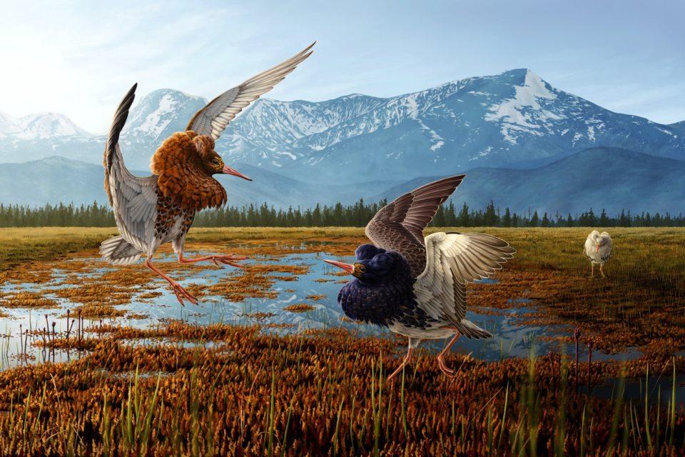 chci vidět velké ptáky