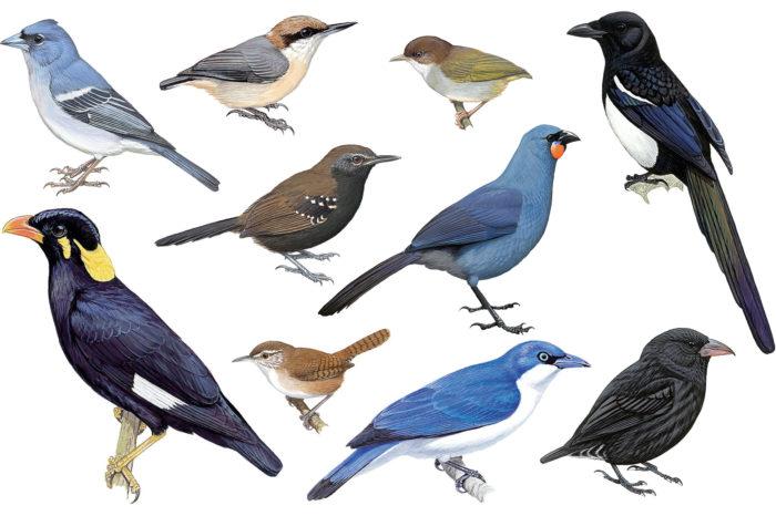 Nový rok, noví ptáci: 10 nově uznaných druhů