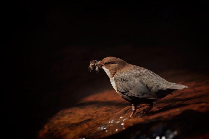 Vladimír Šoltys přečte příběhy o ptácích