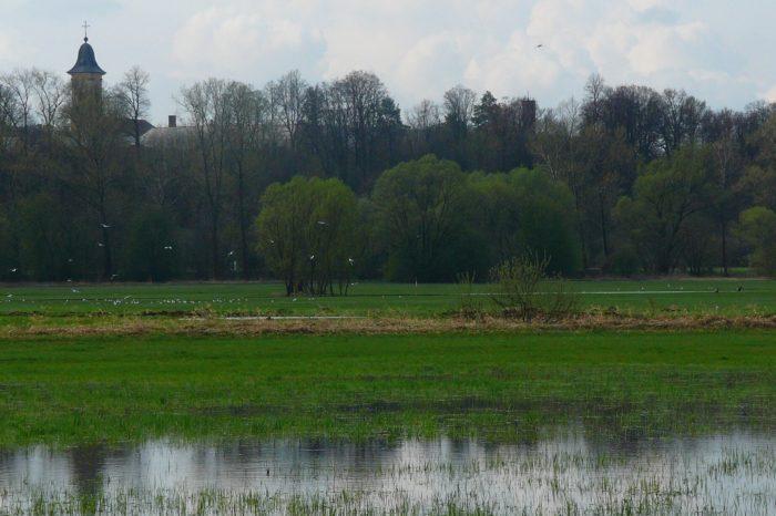 Pastva koní na Josefovských loukách má vytvořit prostředí pro vzácné bahňáky