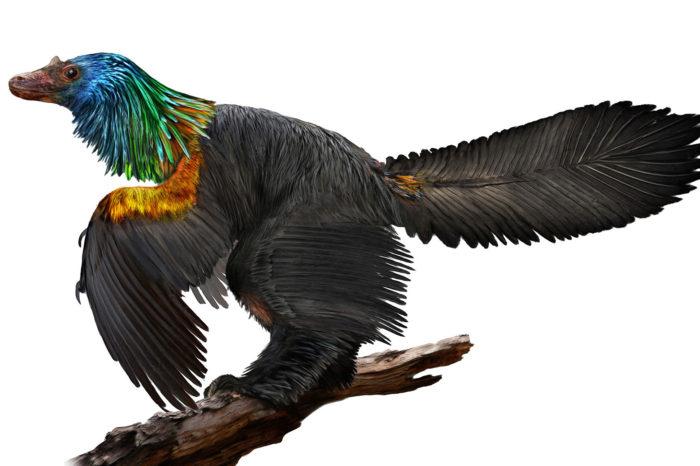 Nově objevený ptačí dinosaur se chlubil iridescentním peřím