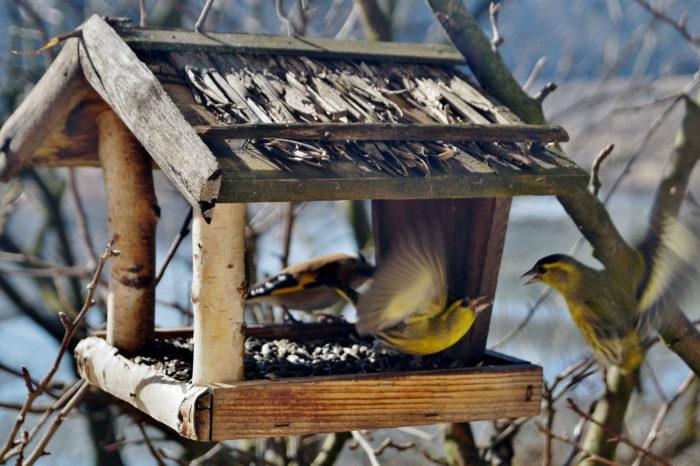 Poznáváme ptáky na krmítku II.