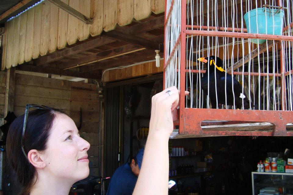 Tereza Švejcarová: Hledání ztraceného druhu