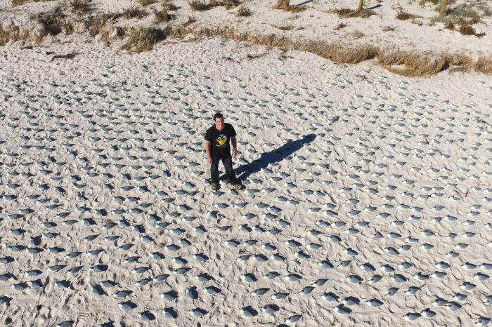 Terénní pozorovatelé překonáni dronem v pokusu o sčítání ptáků