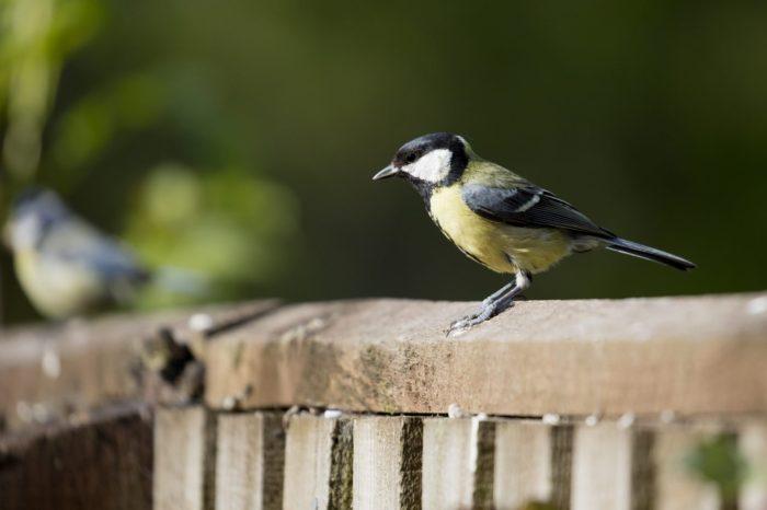 Znečištění těžkými kovy mění chování ptáků