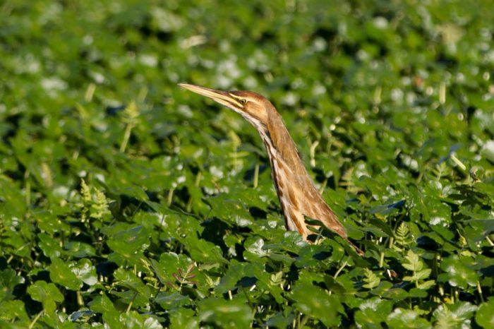 Birdwatching po anglicku