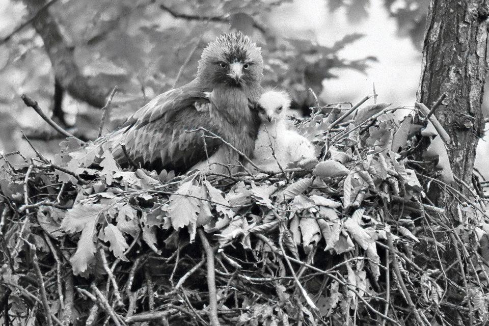 Se Štefanem Dankem o ptačích křídlech pod Vihorlatem