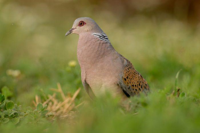 7 druhů, o kterých možná nevíte, že jsou ohroženy vyhynutím