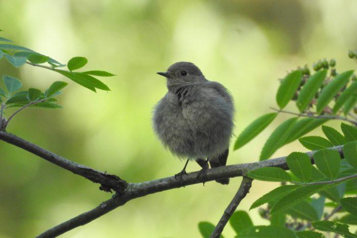 ČSO zprostředkovává svět ptáků zrakově postiženým