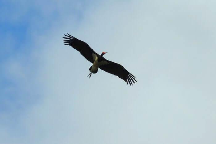 Začíná každoroční ptačí divadlo - podzimní migrace