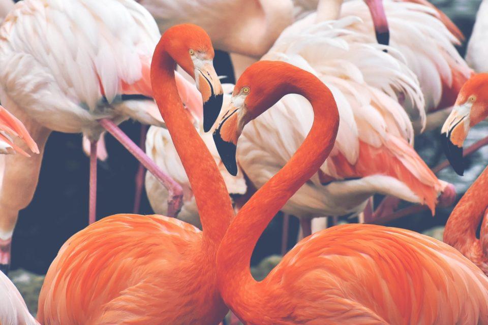 Hluboké hrdlo velké ptáky