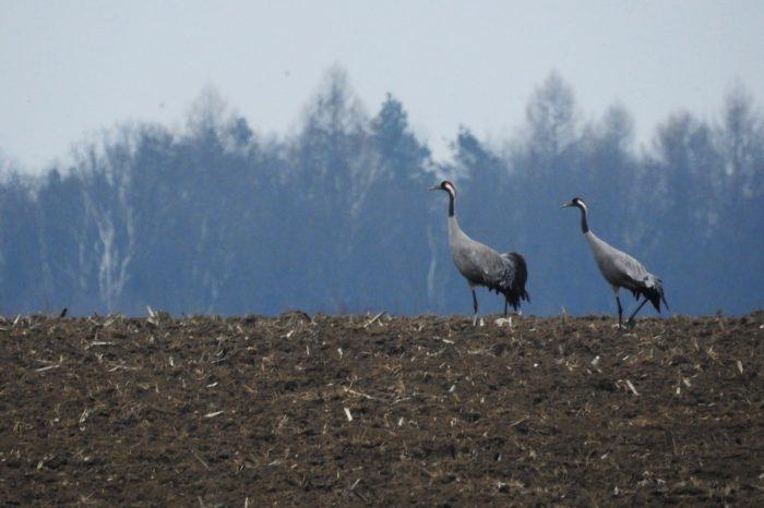 Telemetrické sledování jeřábů v České republice