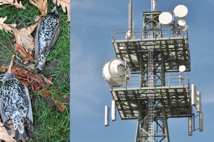 Stojí za hromadnými úhyny ptáků v Nizozemí nová mobilní síť 5G?