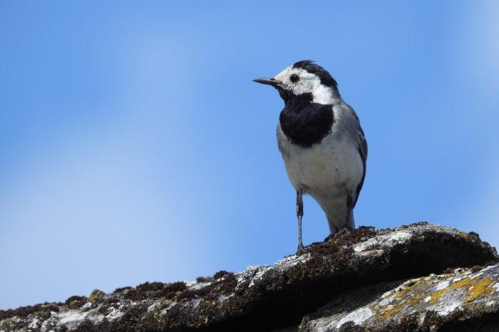 Ve Slovinsku zadrželi náklad nelegálně ulovených ptáků
