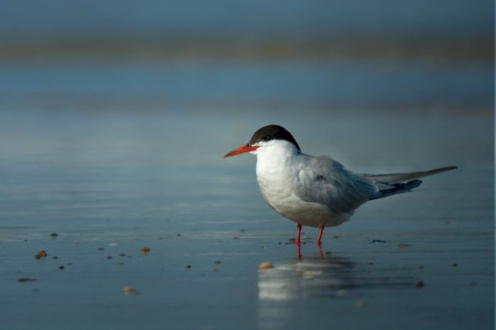 Plánované zvýšení hladiny Nových Mlýnů je hrozbou pro racky a rybáky