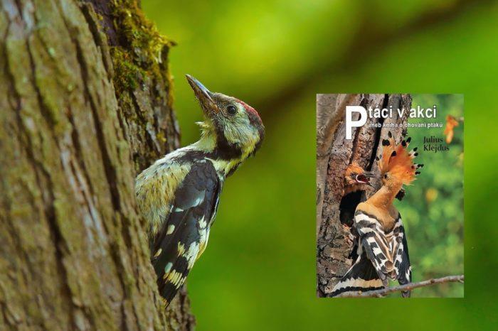 Recenze: Ptáci v akci, aneb kniha o chování ptáků