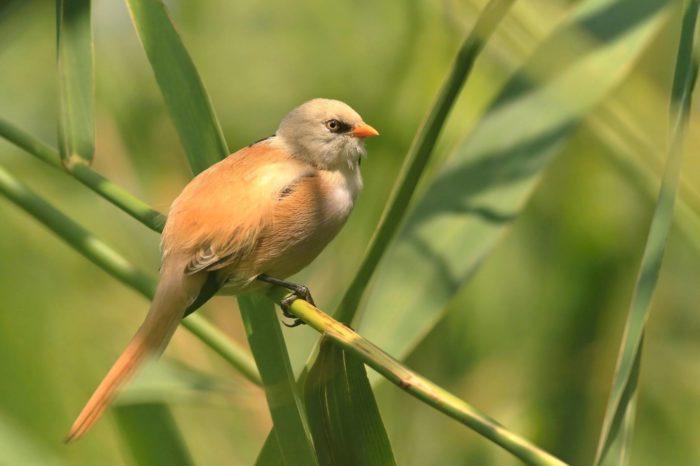 Revitalizace mokřadu Pastvisko u Lednice zlepší podmínky pro ptáky