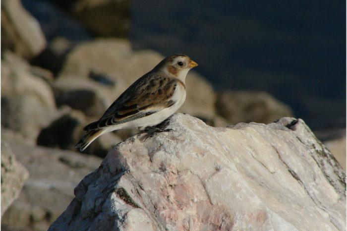 Početnost horských druhů ptáků klesá