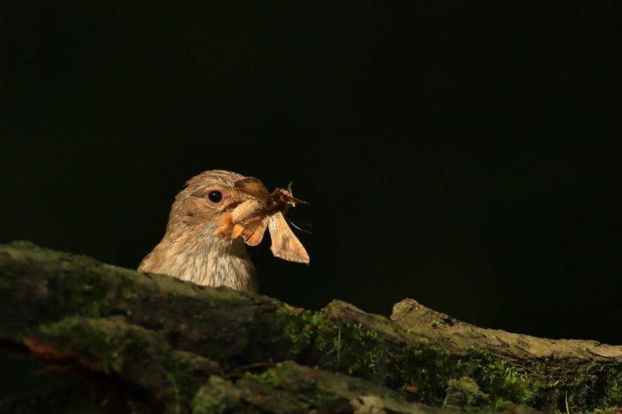 Exotické druhy dřevin v parcích mohou mít negativní vliv na ptáky
