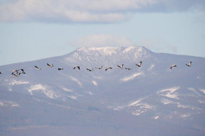 Sucho ohrožuje vodní ptáky na východním Slovensku