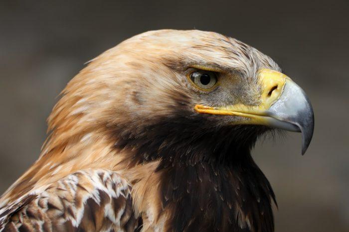 Výsledky druhého mezinárodního sčítání orla královského v Panonské oblasti