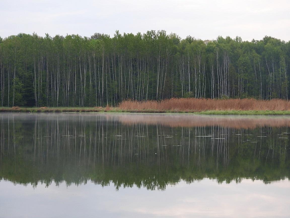 radiokarbonové seznamovací stromy