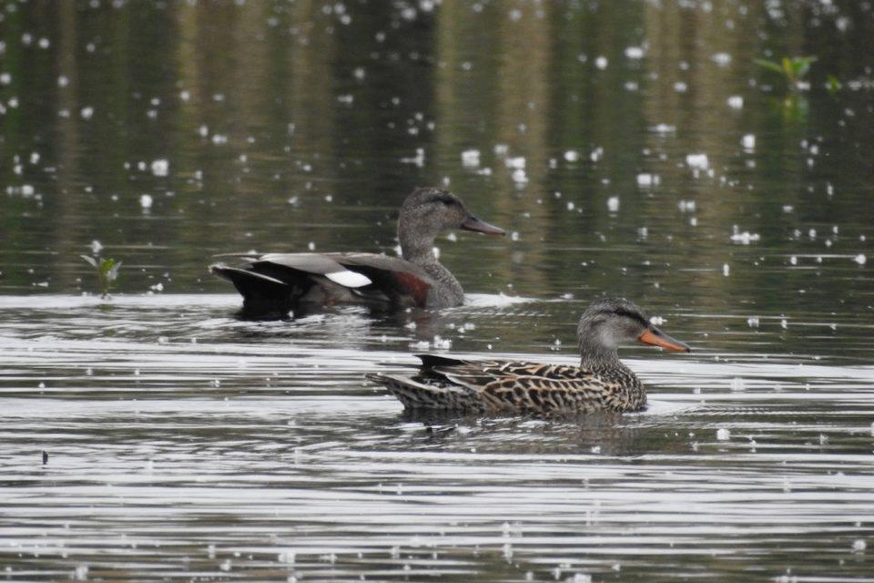 Ptáci přilétají ze zimovišť, ale je jich každým rokem méně