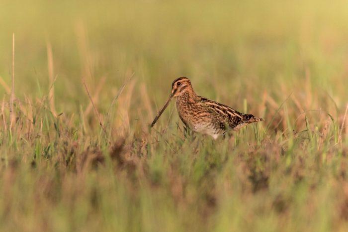 Nálezová databáze ochrany přírody a možnosti jejího užití pro laickou i odbornou ornitologickou veřejnost