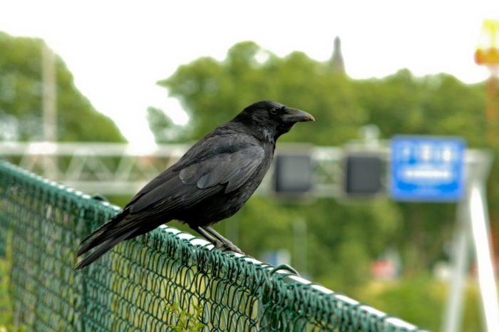Jak může ptáky ve městech ovlivnit hluk