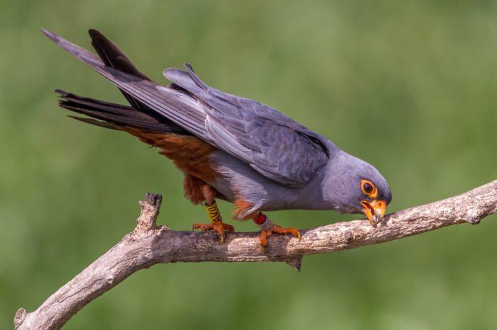 Proč si ptáci třou zobáky?