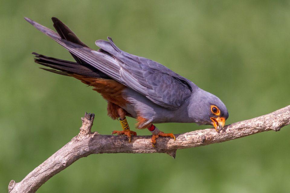 brát obrovské ptáky