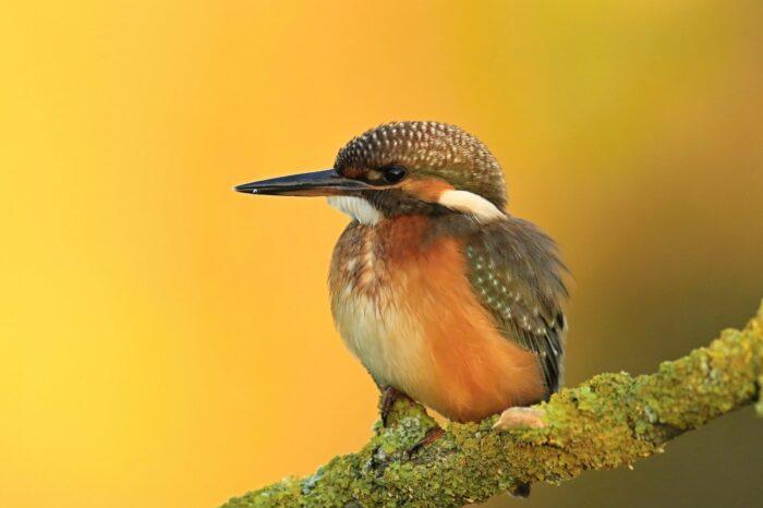 Jak dobré jsou naše znalosti o výskytu ptáků a dalších organismů vČR při pohledu zjemné geografické škály?