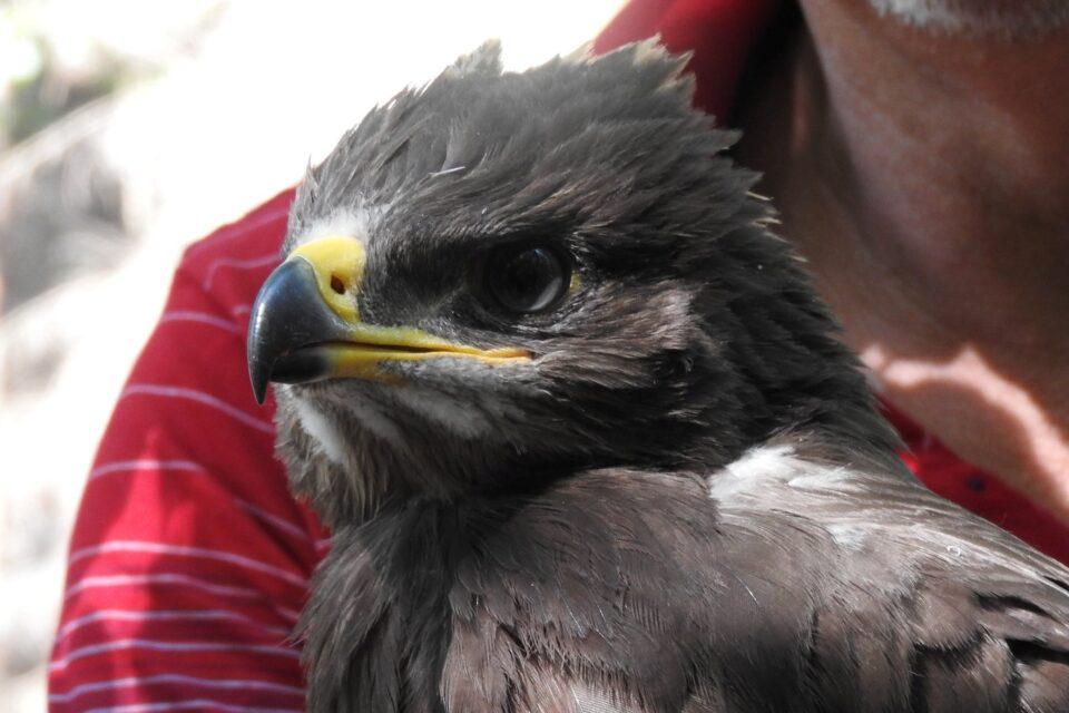 mladé černé velké ptáky